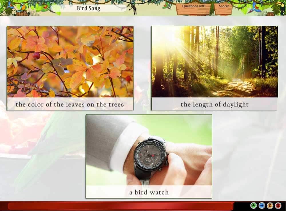 Product Screen - Bird Song