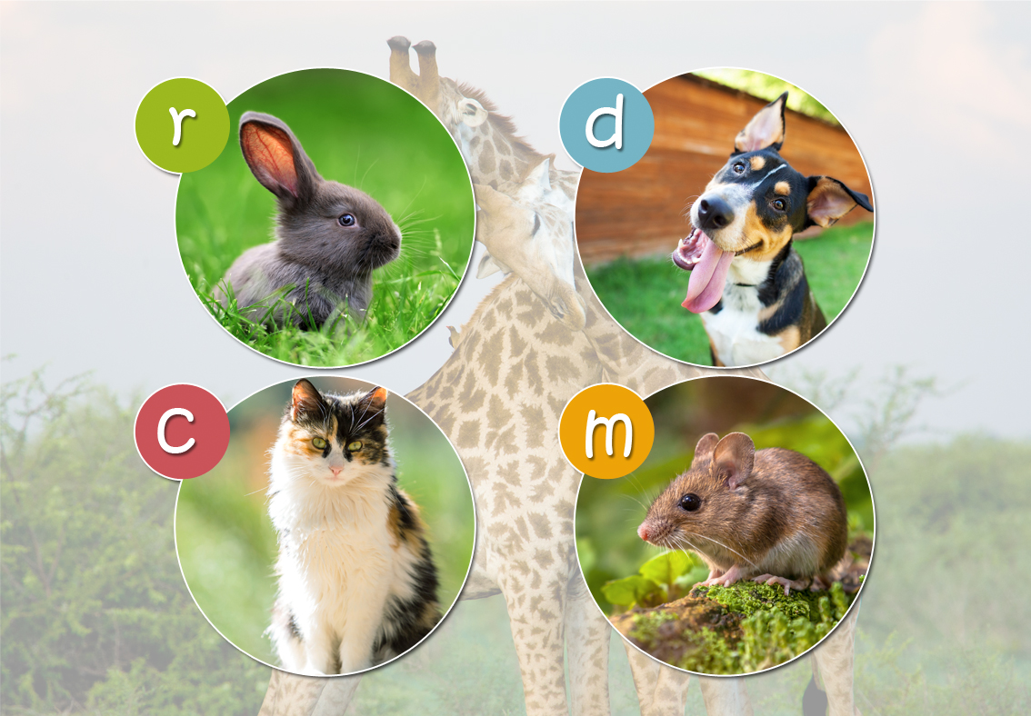 Animal Fun!